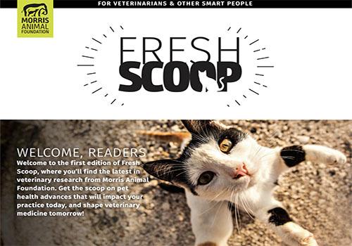 Morris Animal Foundation | Vega Website Awards