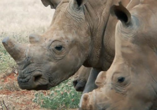 Stewards of Wildlife | Vega Website Awards